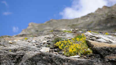 plant on a rock