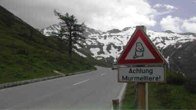 Road sign marmots