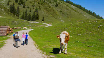 hikers beside a cow
