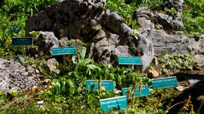 Alpengarten Dobratsch mit Beschilderung