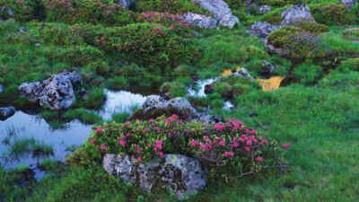Blumenvielfalt am Fluss an der Nockalmstraße